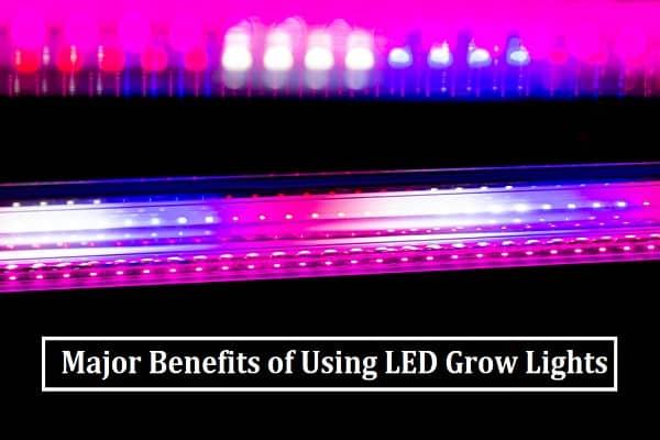 Major Benefits of Using LED Grow Lights